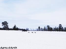 Petite visite des rennes