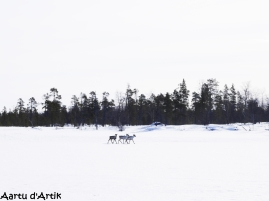 Course folle derrière les rennes