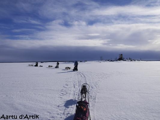 Conduite d'attelage et ski-joering